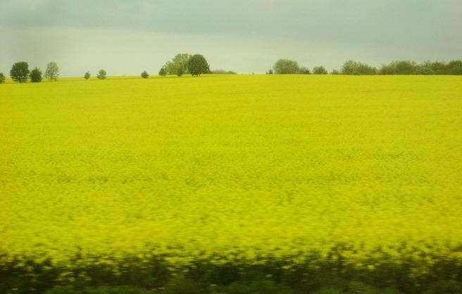 bis zum Horizont: gelb